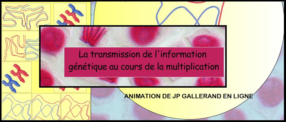 animation Transmission de l'information génétique multiplication cellulaire SVT