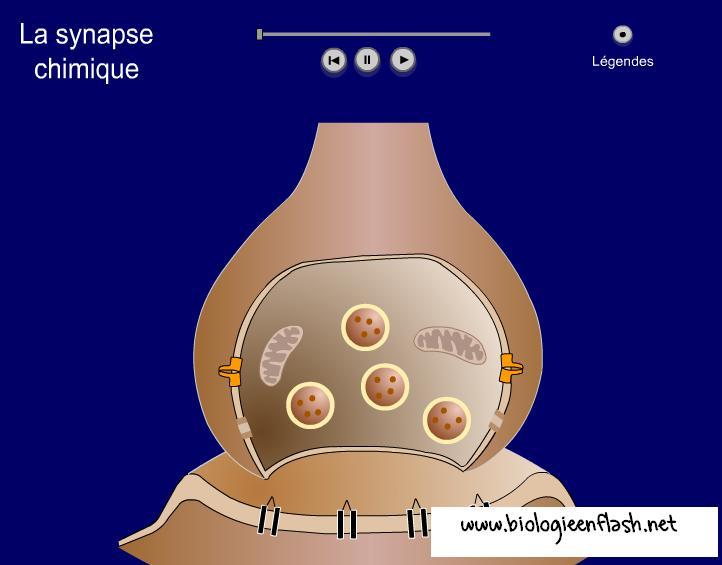 bioflash-synapse