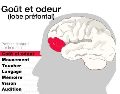 cerveau-sens