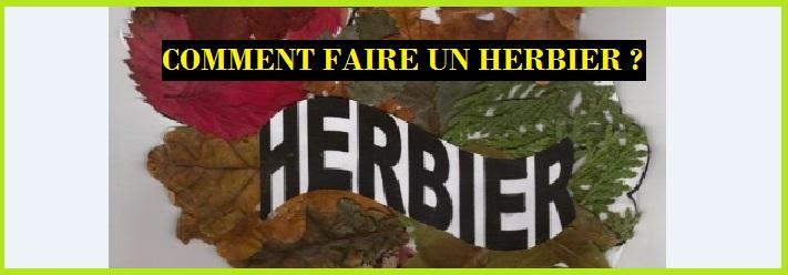 Herbier vive les svt les sciences de la vie et de la terre au coll ge et au lyc e - Faire un herbier ...