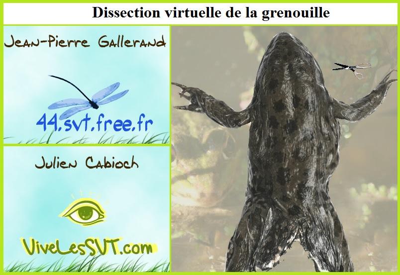 La Communication Nerveuse Cours De Svt 4eme Vive Les Svt