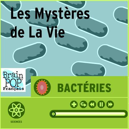 brain-pop-bacterie