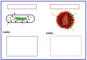 comparaison-virus-bacterie