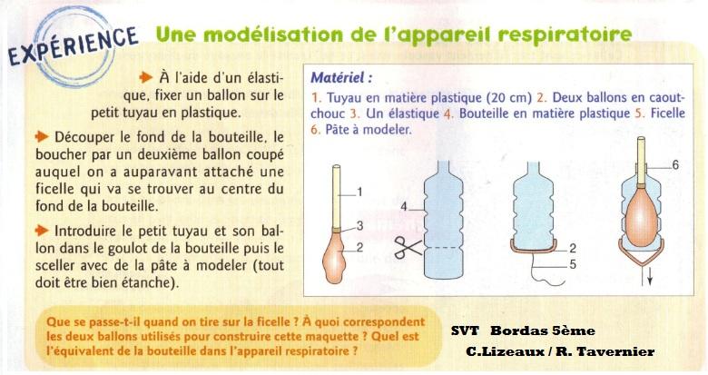 Favori L'appareil respiratoire humain - Cours de SVT 5ème | Vive les SVT  VB32
