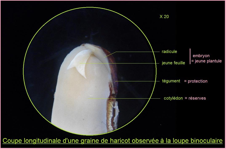les Différentes Parties d'un Microscope