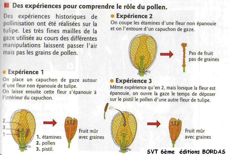 pollen-pistil