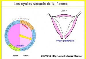 cycles-anim