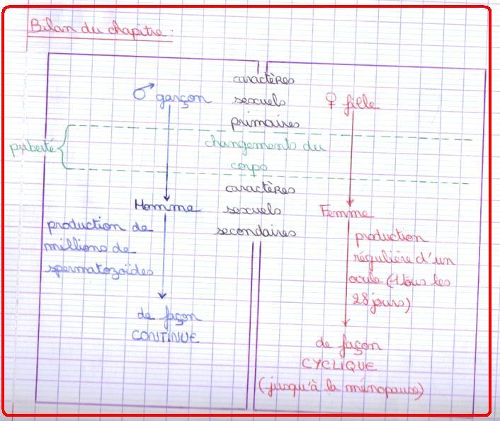 bilan-chapitre-reproduction-etre-humain