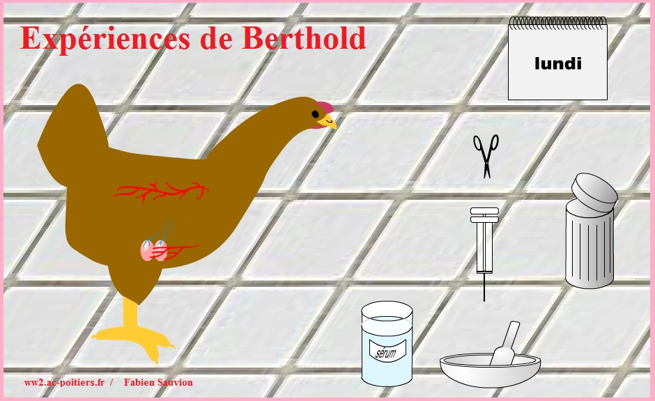 animaux basse cour fiche cycle 2