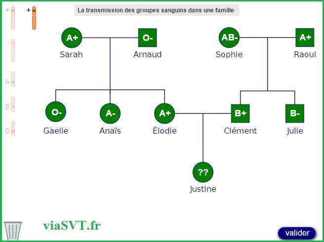 groupes sanguins généalogie SVT génétique