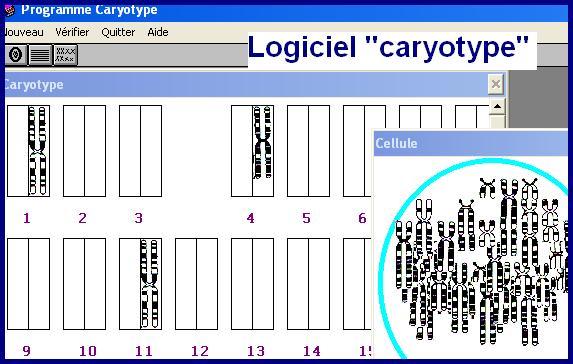logiciel-caryotype