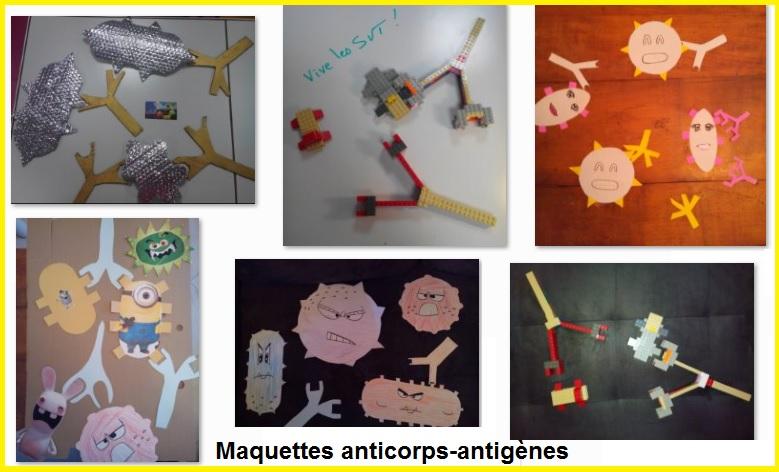 maquettes anticorps antigènes SVT 3ème immunité