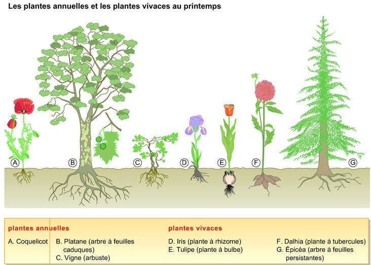 L 39 occupation du milieu au cours des saisons cours de svt for Plante 21 svt