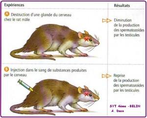 rat-gonadostimulines