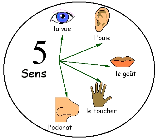 5sens