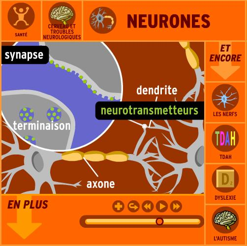 neurone-brain-pop-flash