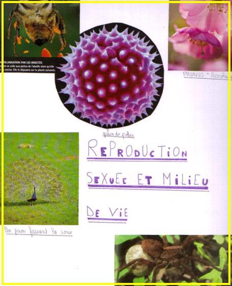 reproduction-et-milieu-de-vie