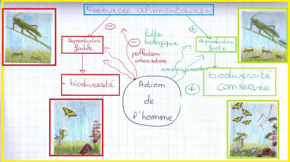 schema-bilan-reproduction-sexuee-et-milieu-de-vie