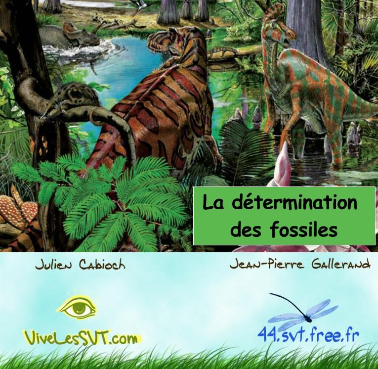 détermination des fossiles SVT animation