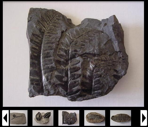 diaporama-plantes-fossiles