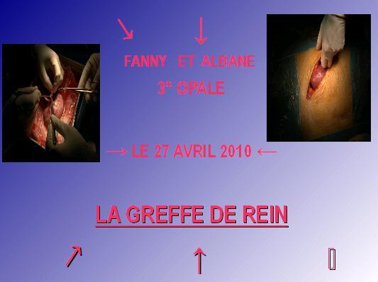 greffe-de-rein