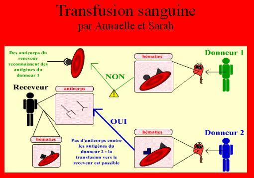 transfusions-sanguines1