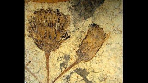tournesol-fossile