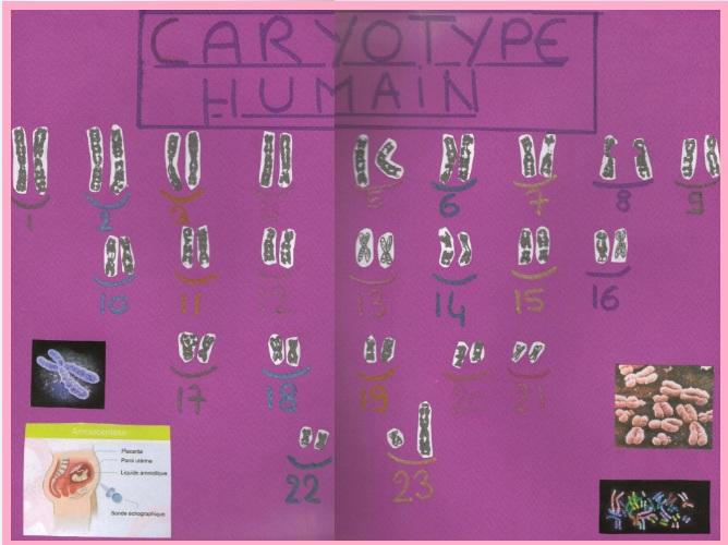 caryotype-svt