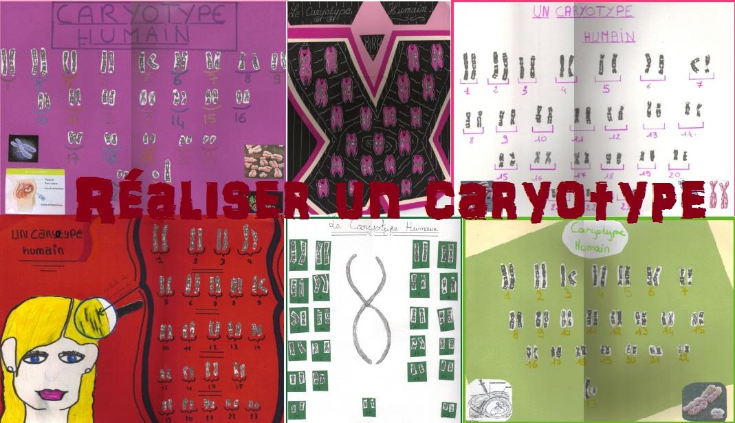 realiser-un-caryotytpe
