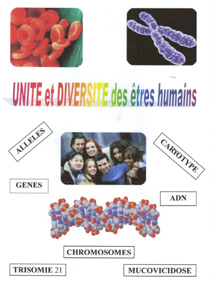 genetique8