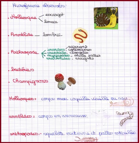 microfaune sol