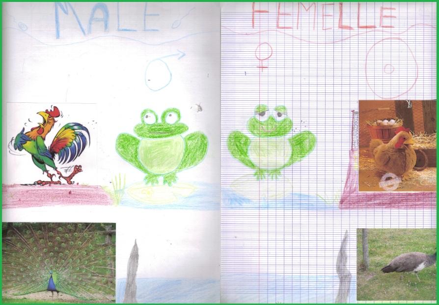 reproduction-sexuee-et-milieu-de-vie-12