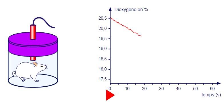 souris SVT respiration dioxygène