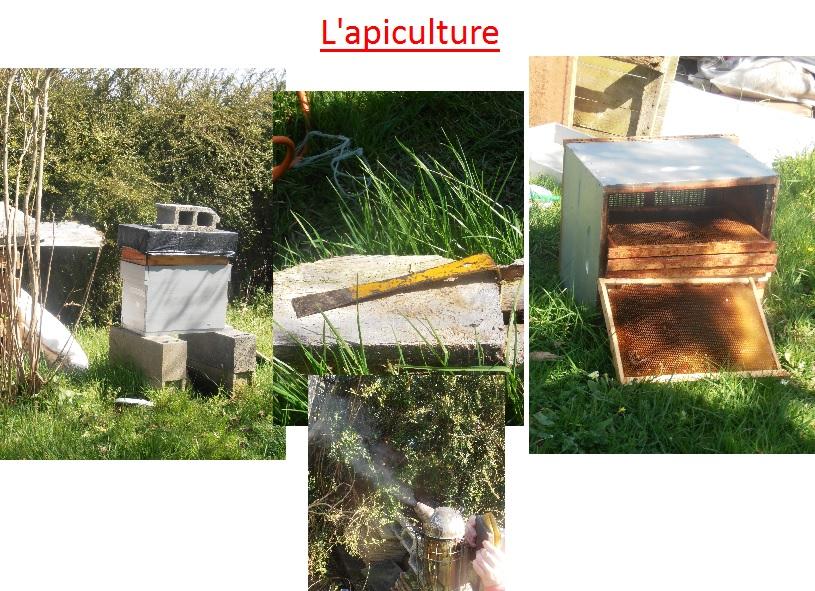 apiculture abeilles SVT exposés