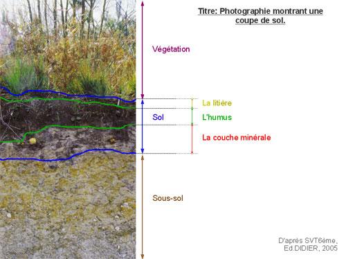 le sol : un patrimoine durable ?   vive les svt !, les sciences de