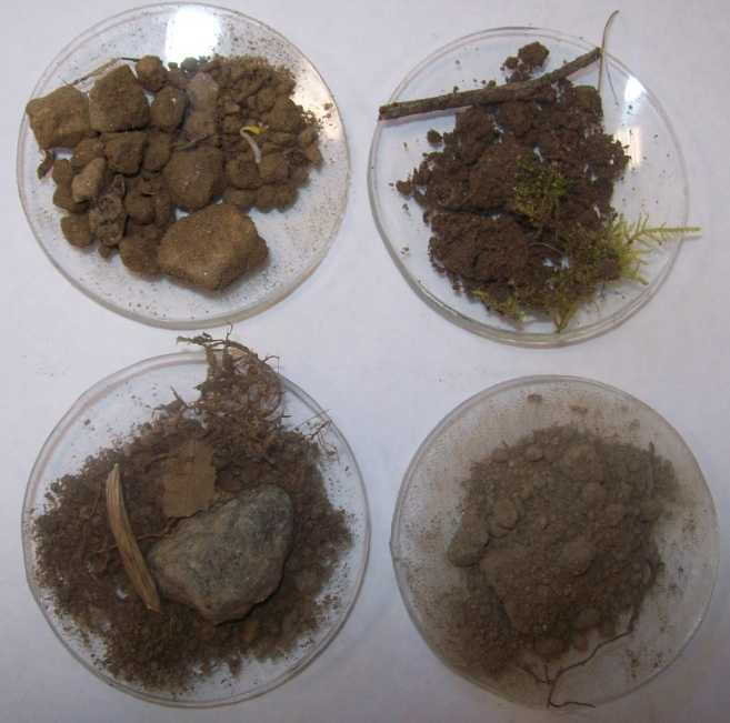 Le sol un patrimoine durable vive les svt les sciences de la vie et - Differents sols maison ...