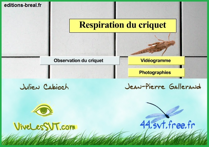 respiration du criquet