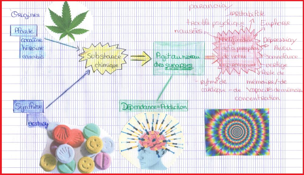 action des drogues SVT 4ème système nerveux
