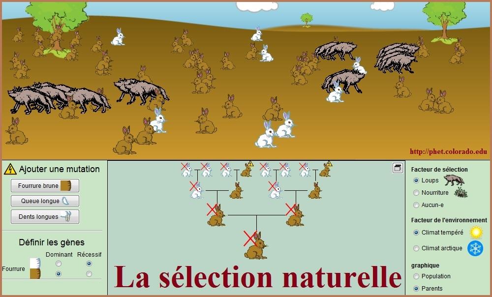 la-sélection-naturelle-SVT