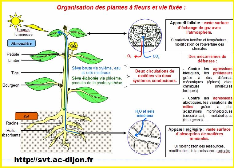 organisation plantes à vie fixée