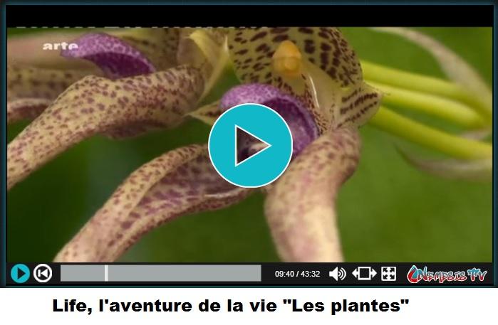 vidéo les plantes coévolution