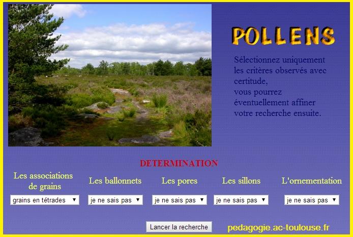 détermination pollen