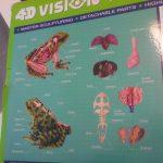 Classification des espèces maquettes animaux SVT 3D 4D (10)