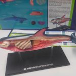 Classification des espèces maquettes animaux SVT 3D 4D (3)