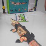 Classification des espèces maquettes animaux SVT 3D 4D (4)