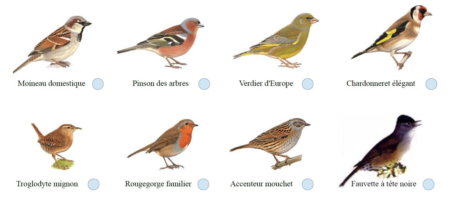 oiseaux 1