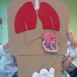 Modélisation de la circulation sanguine SVT (5)