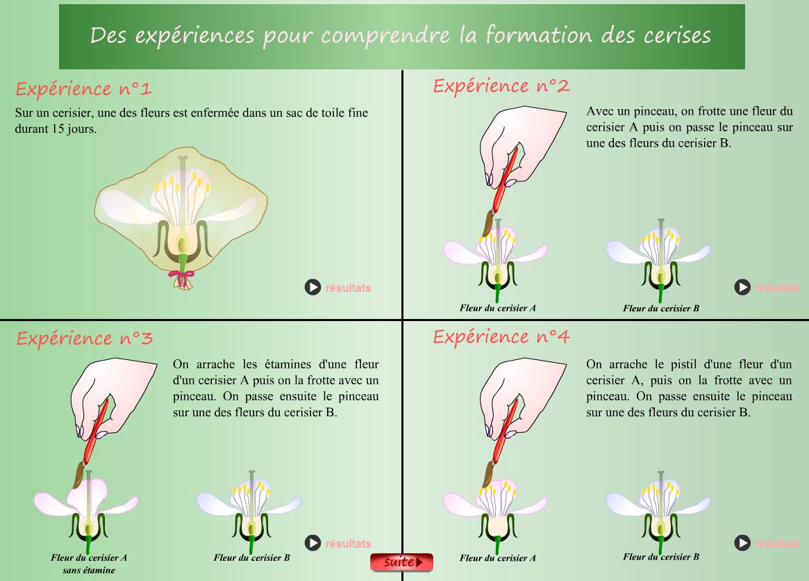 expériences pollinisation SVT