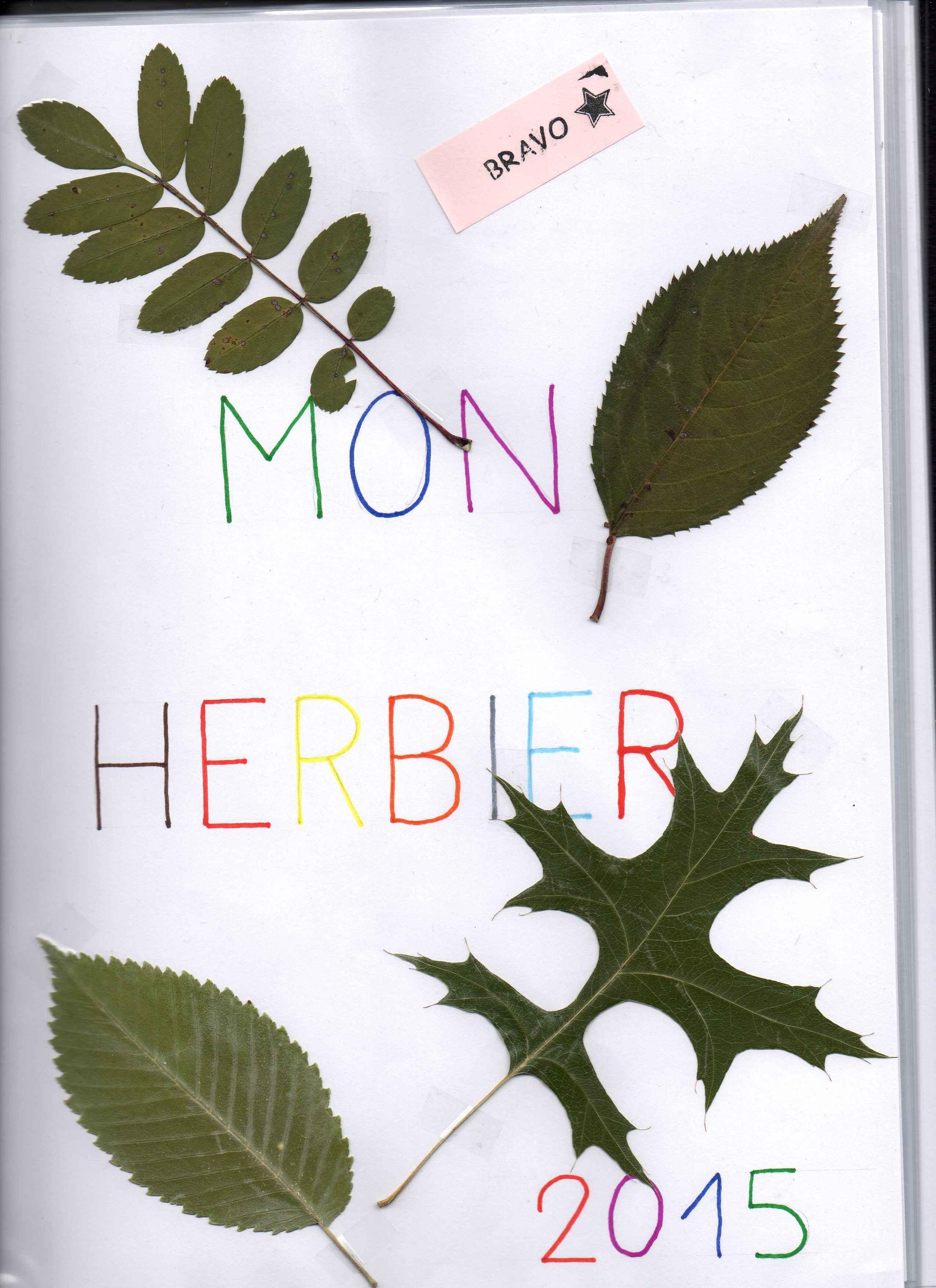 Magnifique herbier bravo estelle vive les svt les sciences de la vie et de la terre au - Faire un herbier ...