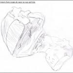 dessin-coeur-de-porc-svt